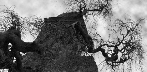 creepy_tree
